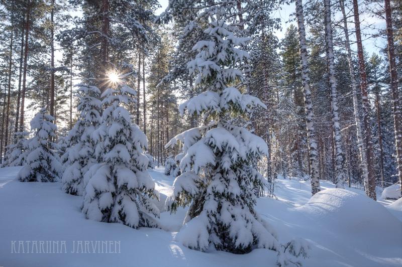 winter snow and sunburst in Finland