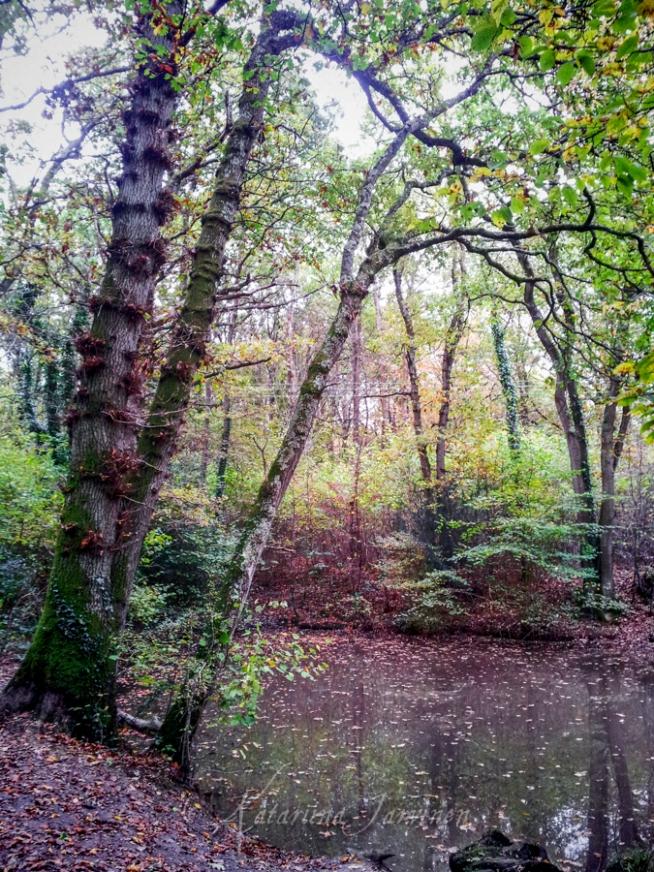 Bedelands Nature Reserve